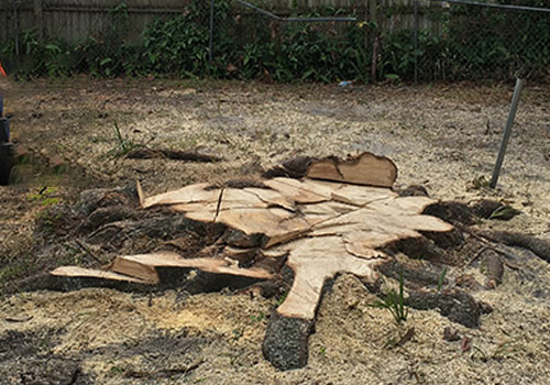 a large stump from a client